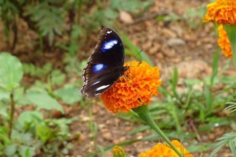 το καλοκαίρι, φύλλο, φύση, πολύχρωμα, βότανο, πεταλούδα, λουλουδιών, φυτών, έντομο
