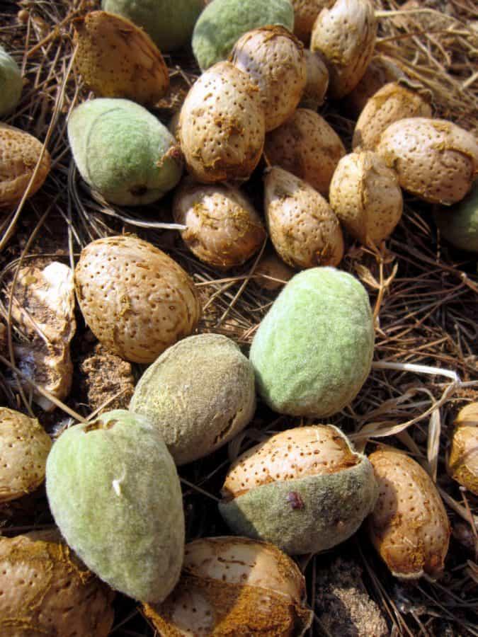 seed, peach, grass, plant, food, detail, macro