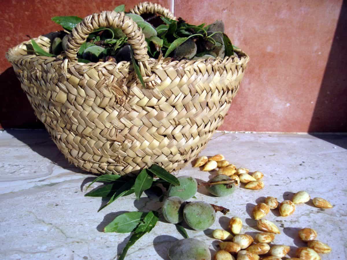wicker basket, wooden, food, corn, still life, outdoor, seed