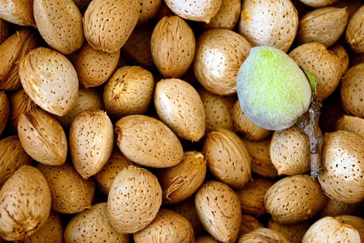 seed, peach, food, diet, protein, wood, herb