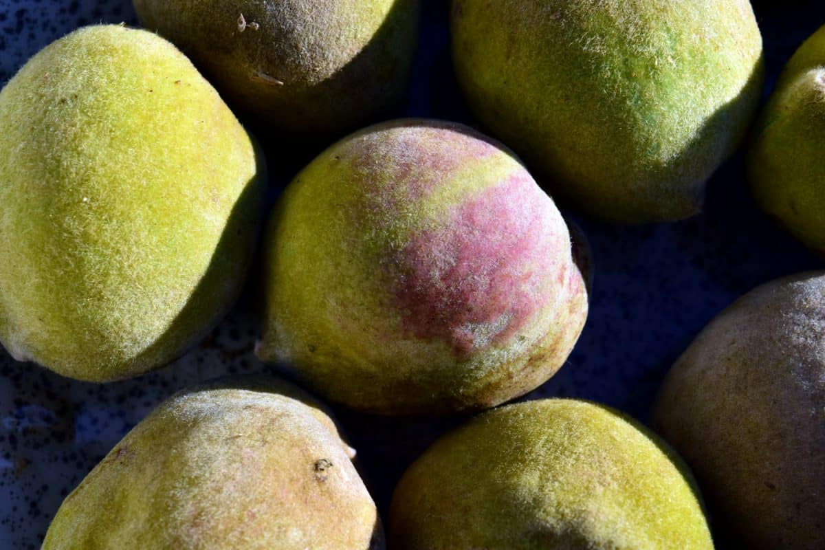 peach, food, fruit, organic, nutrition, plant, vitamin