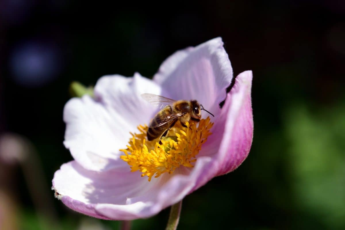 bee, nature, flower, summer, pollen, insect