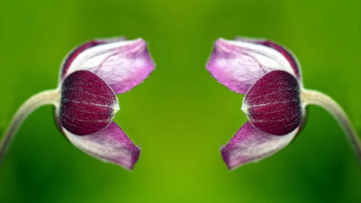 nature, garden, flower, flora, petal, pink, plant
