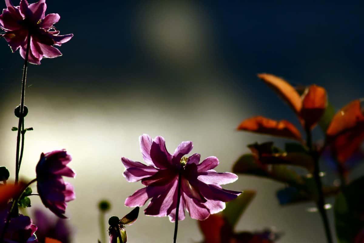 leaf, flower, summer, nature, flora, garden, pink, petal, shadow