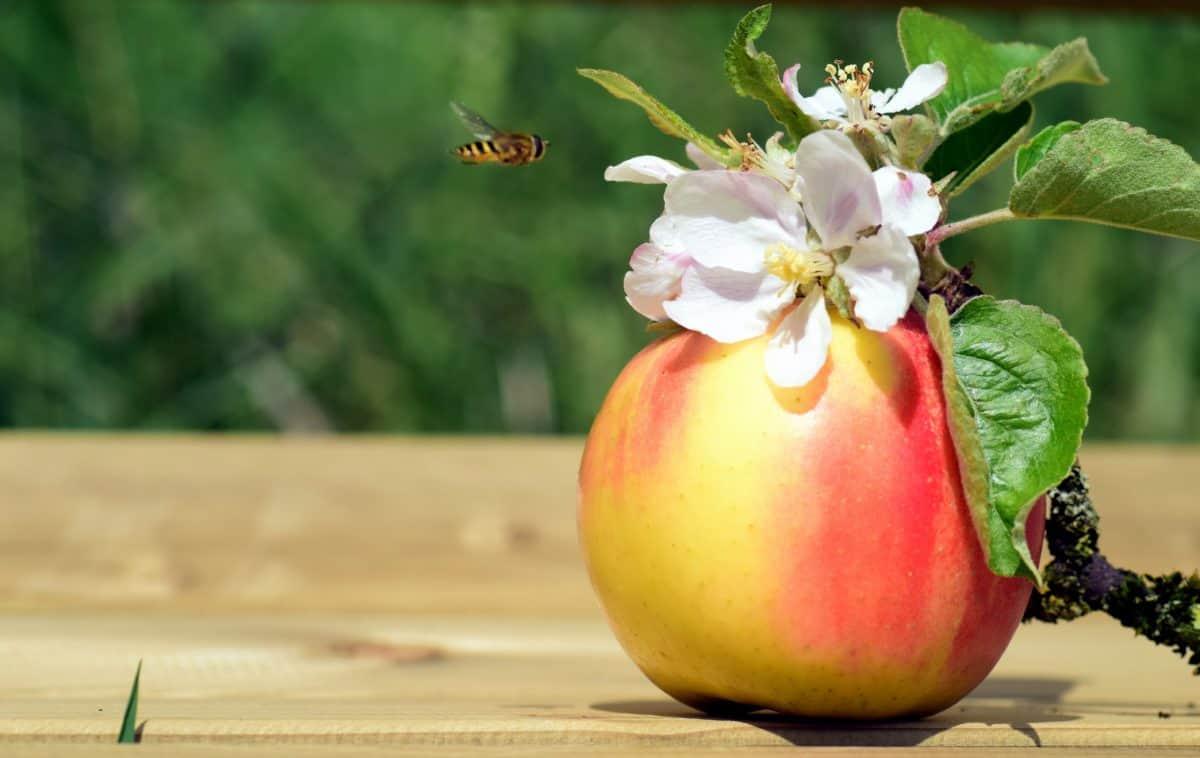 apple, orchard, detail, honey, fruit, detail, organic
