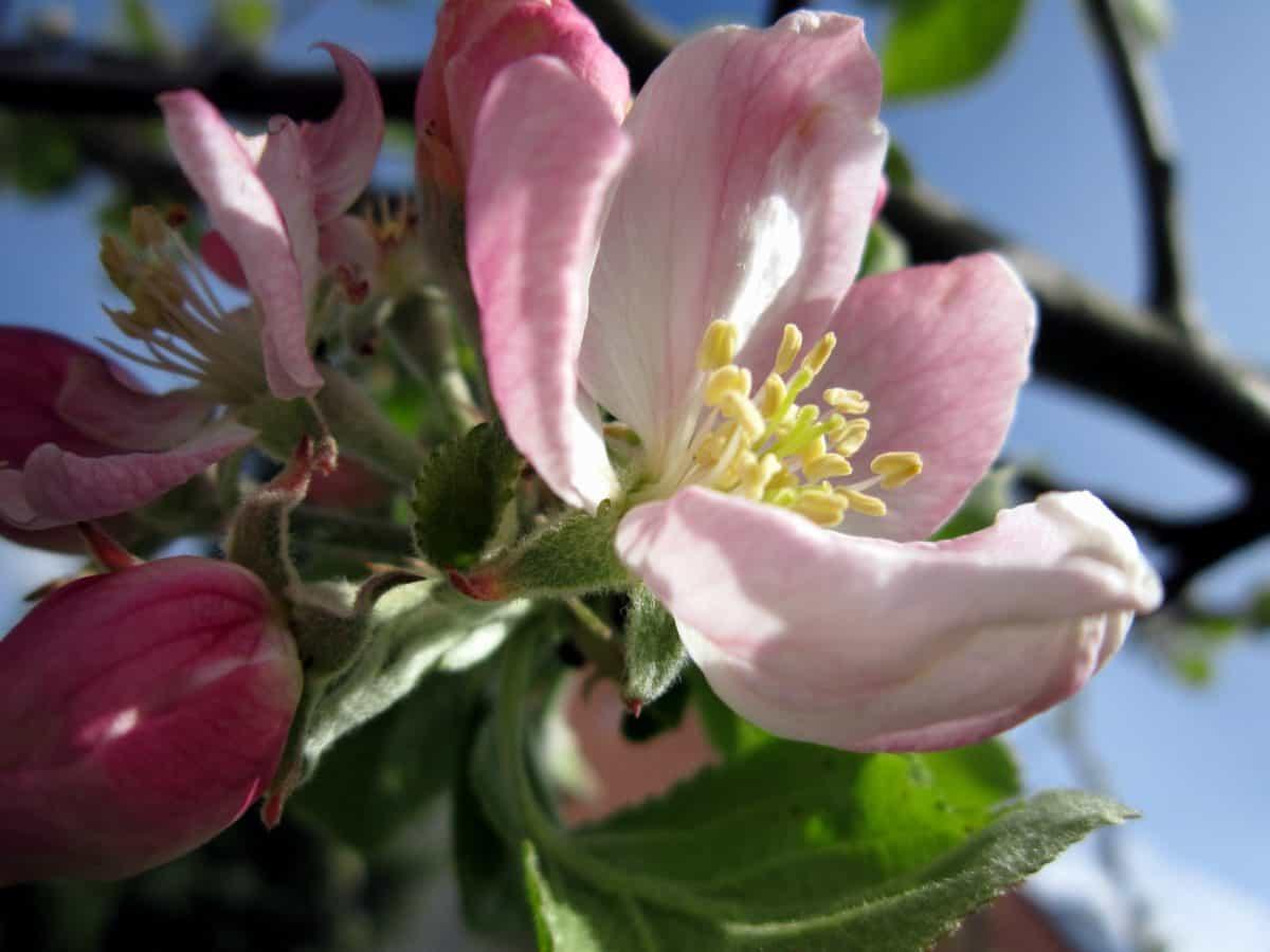 leaf, flora, branch, tree, nature, flower, pollen, macro, pollen