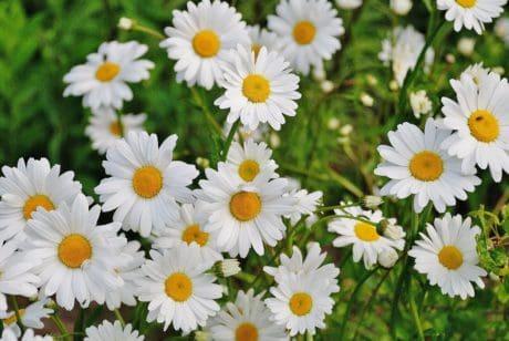 Foto gratis natura foglia fiore coccinella macro for Margherita pianta