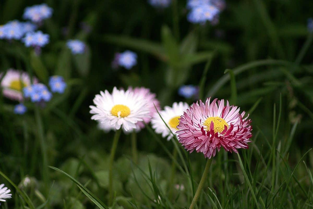 summer, flora, flower, field, grass, garden, nature, plant