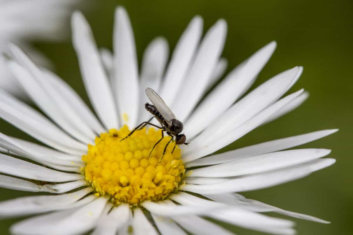 insect, flower, nature, daisy, garden, blossom, plant, petal