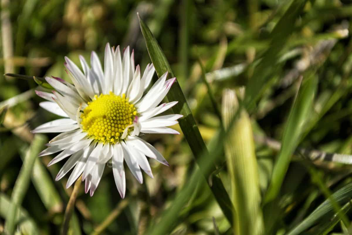 leaf, nature, summer, flora, garden, flower, daisy, plant