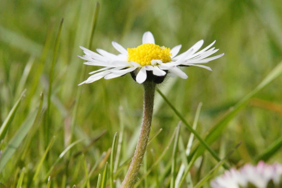 summer, field, nature, grass, flora, garden, flower, daisy