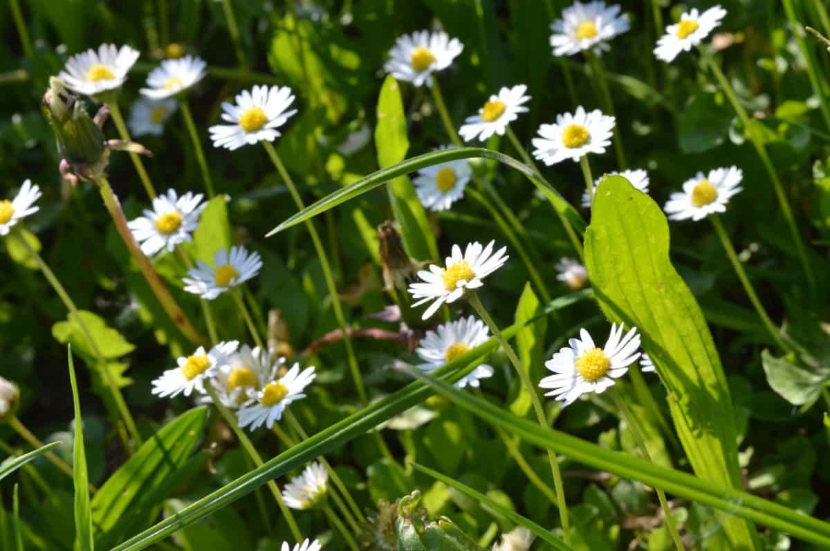 field, green grass, flora, meadow, flower, leaf, summer, nature