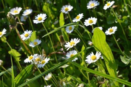 Lapangan rumput hijau flora, padang rumput, bunga, daun, musim panas, alam