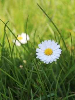 grass, flower, lawn, field, garden, summer, flora, nature