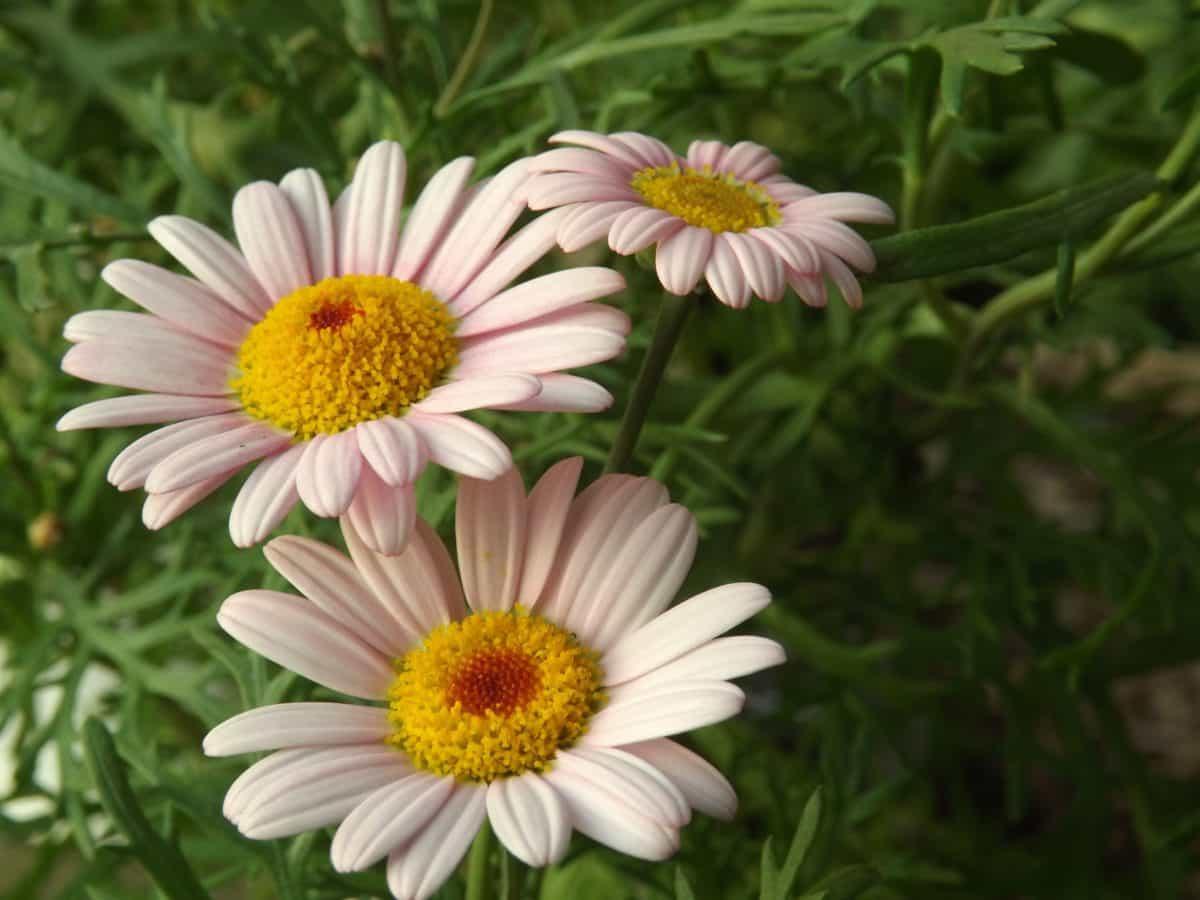 petal, summer, field, nature, garden, flora, flower, leaf