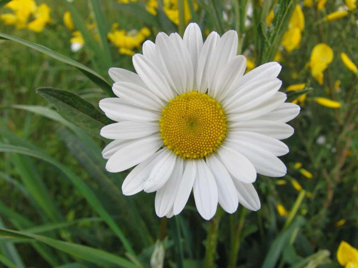 flower, nature, summer, leaf, field, grass, garden, flora