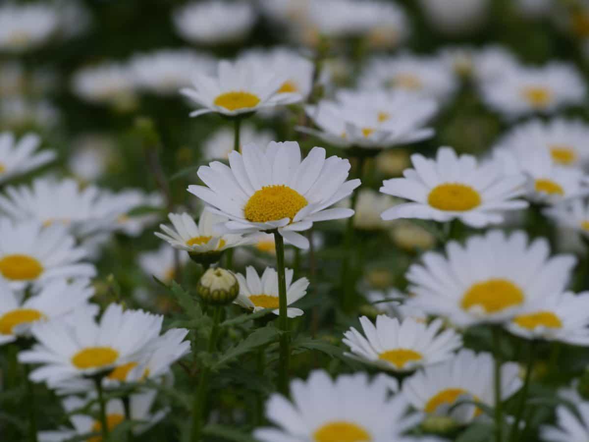 blad, eng, makro, natur, blomst, flora, haven, felt, sommer, urt