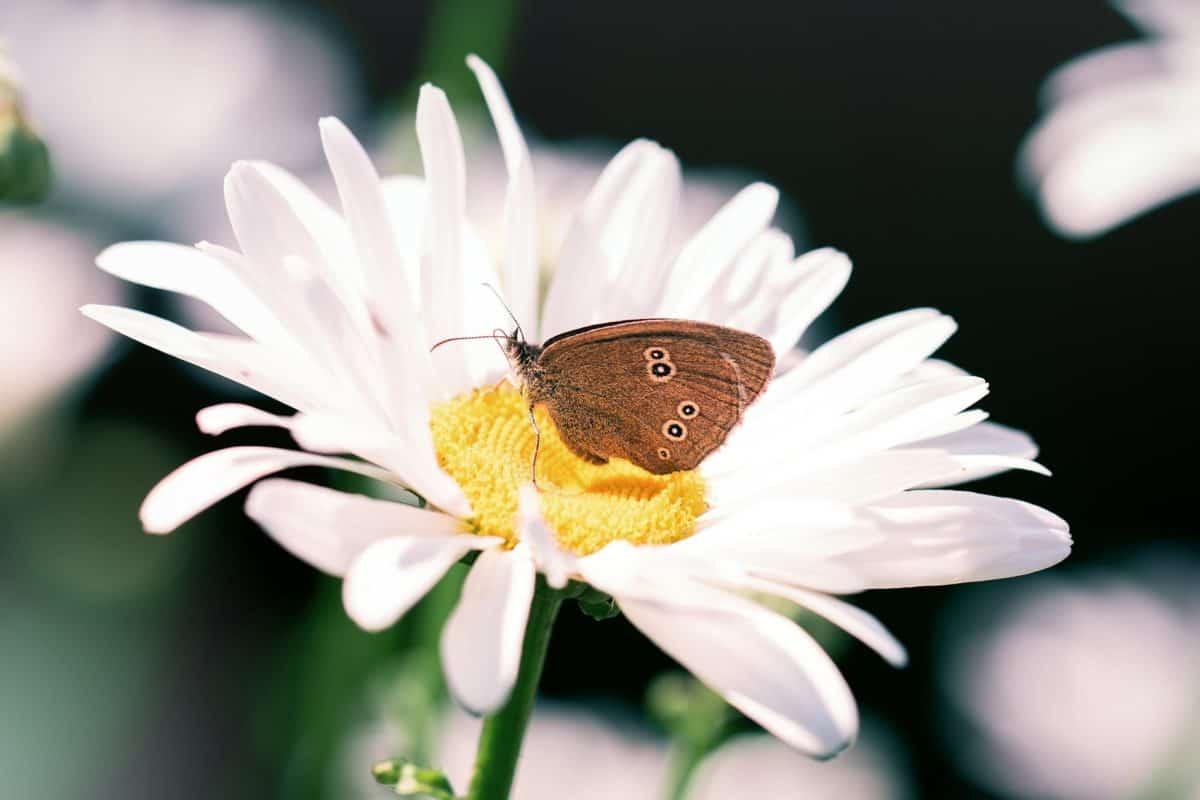 flora, insect, flower, garden, nature, summer, butterfly, macro