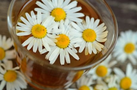 camomille, thé, fleur, daisy, plante, fleur, plante, pétale, pré