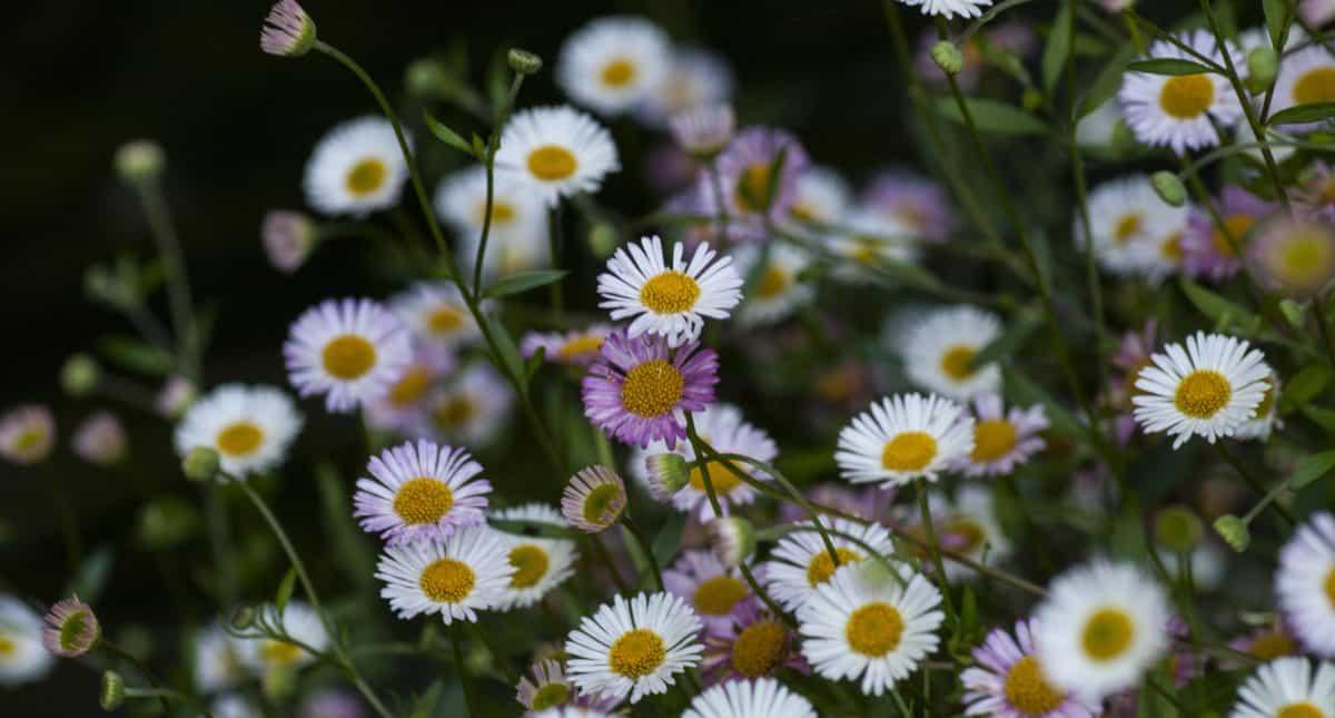 meadow, leaf, flora, flower, field, summer, nature, petal, vegetation