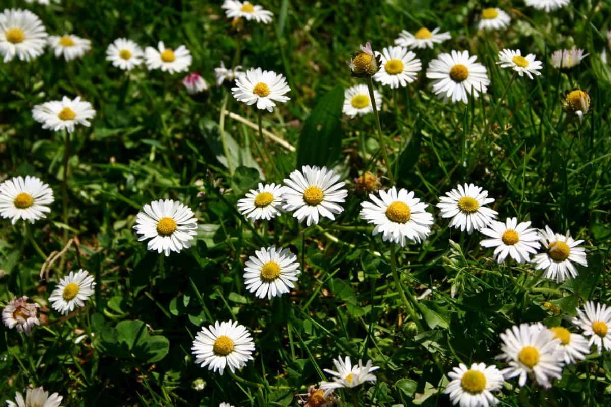 champ, été, jardin, fleur, feuille, nature, lumière du jour, herbe, flore