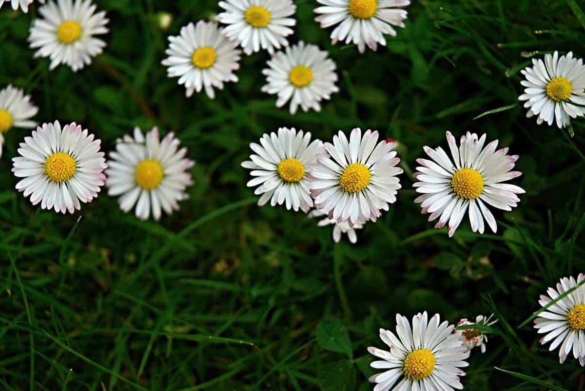 wildflower, flora, daylight, summer, garden, field, nature, green grass, meadow