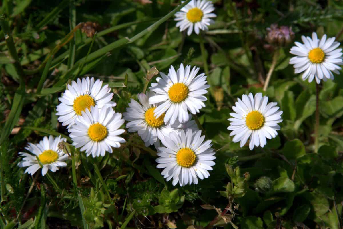 field, flora, garden, grass, flower, summer, nature, herb