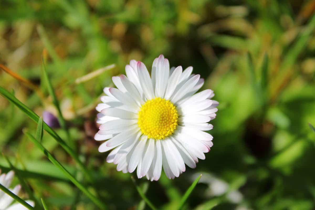 flora, grass, field, summer, nature, leaf, flower, garden