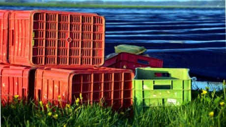 grass, daylight, summer, crate, plastic, outdoor, object, colorful