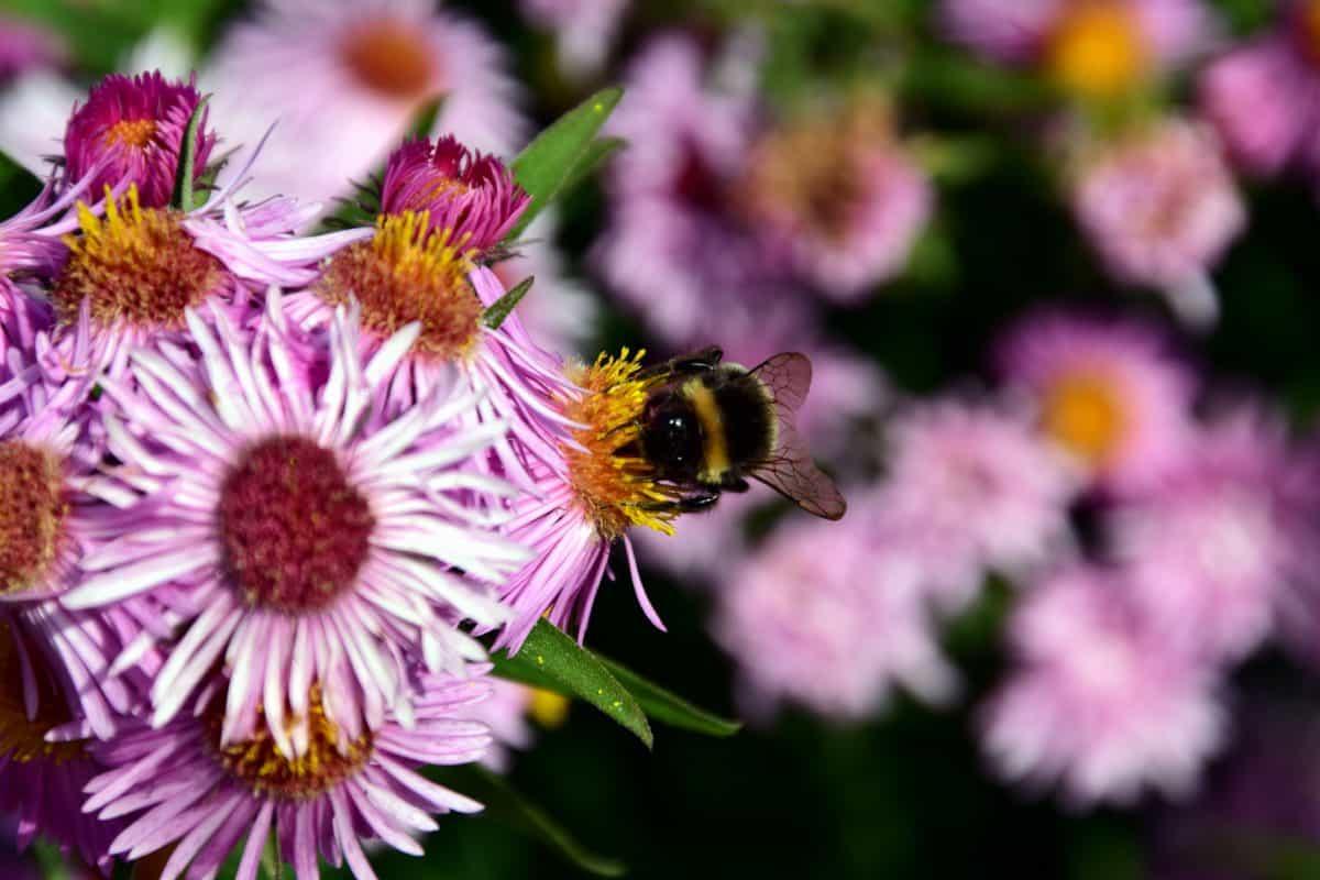 flora, nature, petal, flower, garden, bumblebee, summer, leaf, pollen