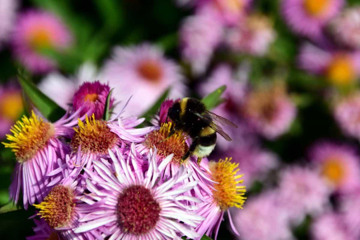 leaf, petal, flower, nature, pollen, bumblebee, summer, garden, flora