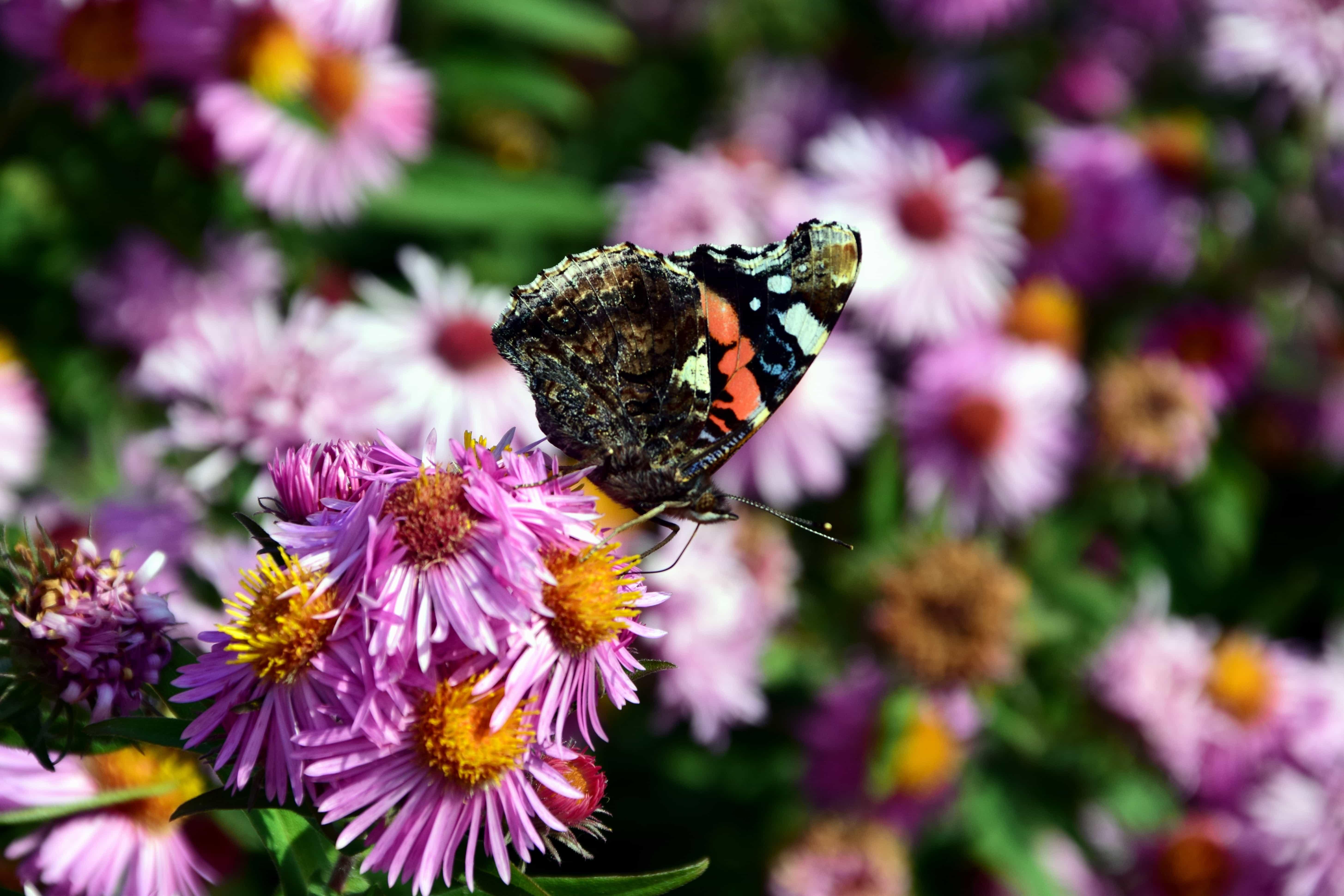 Лето картинки цветы бабочки, папы
