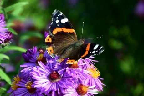 nature, garden, flower, summer, macro, colorful, butterfly, insect, plant