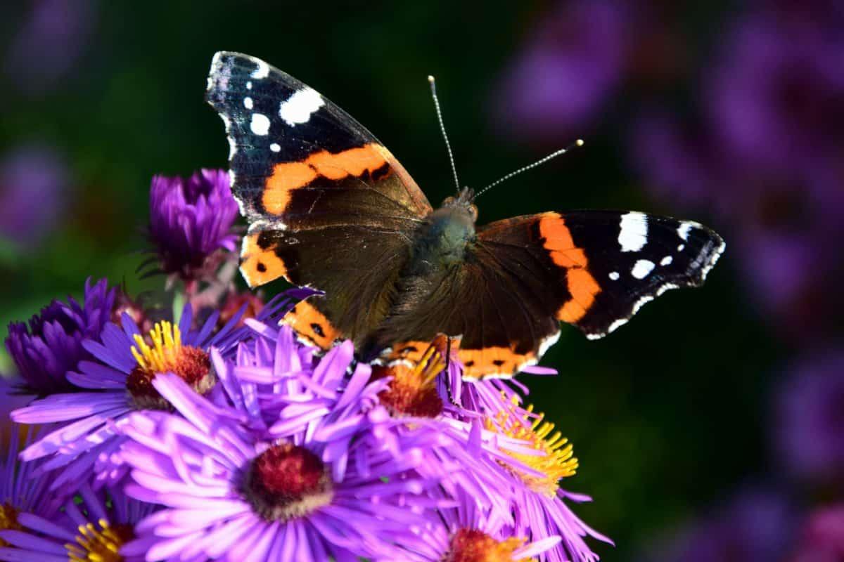 naturaleza, verano, insectos, mariposa, flor, jardín, planta