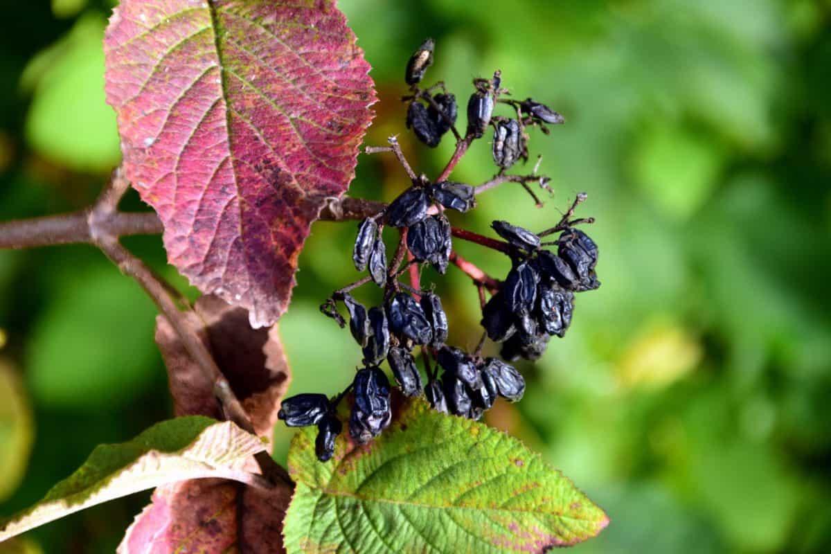 natura, giardino, flora, foglia, pianta, albero, foglie, fogliame, all'aperto