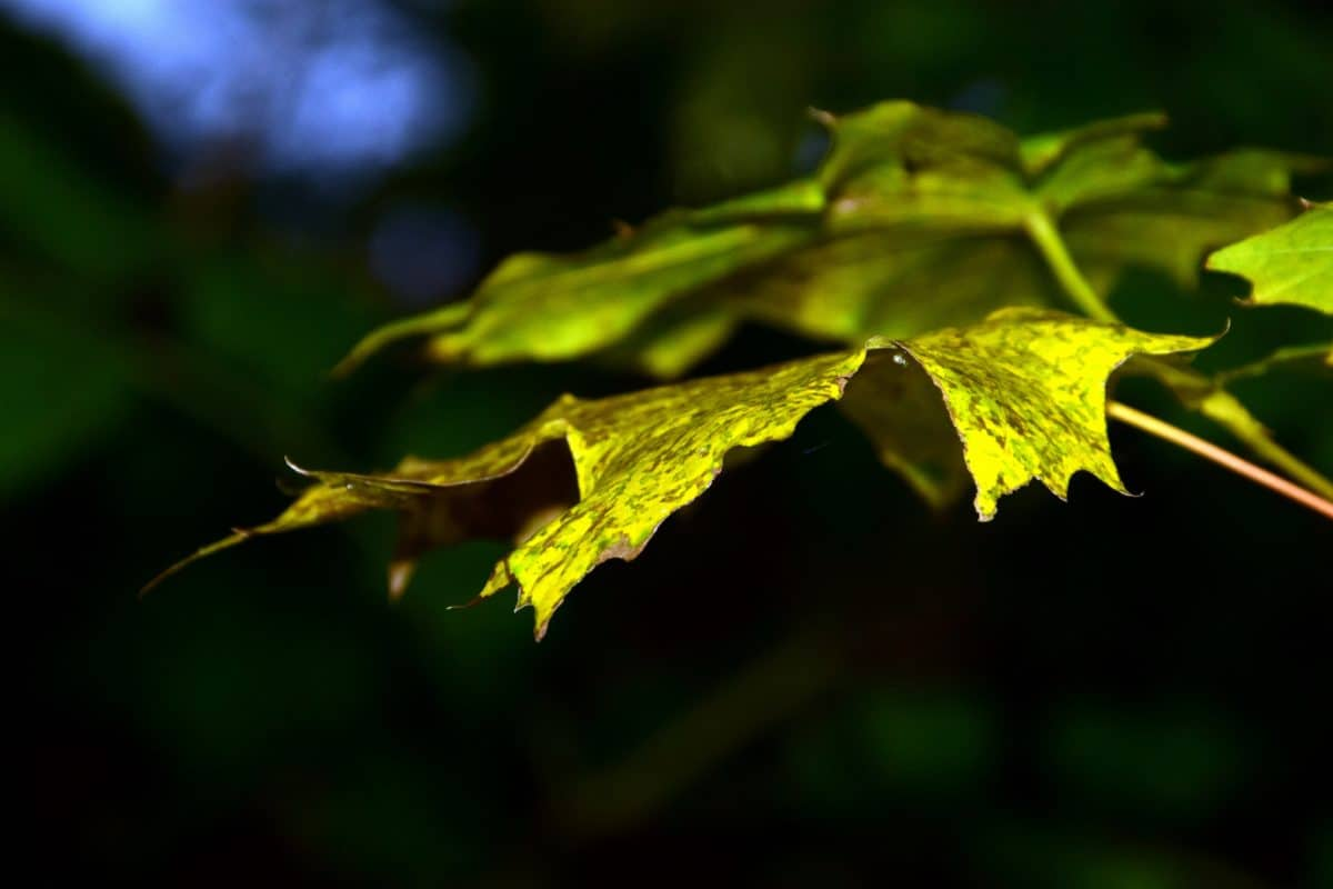 nature, flora, garden, green leaf, outdoor, daylight, tree, plant