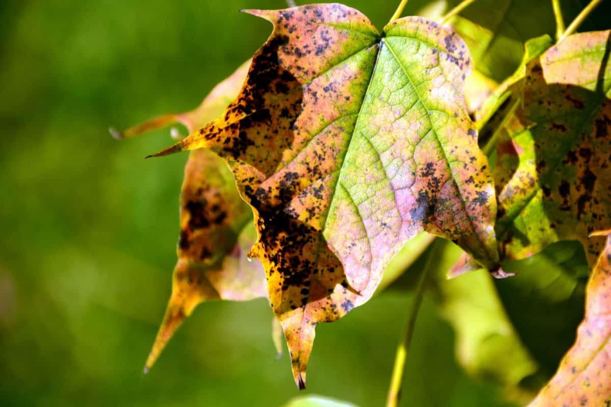 leaf, nature, flora, autumn, tree, nature, foliage