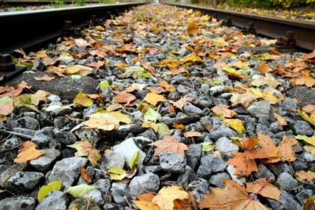 environment, leaf, nature, texture, stone, outdoor, rail