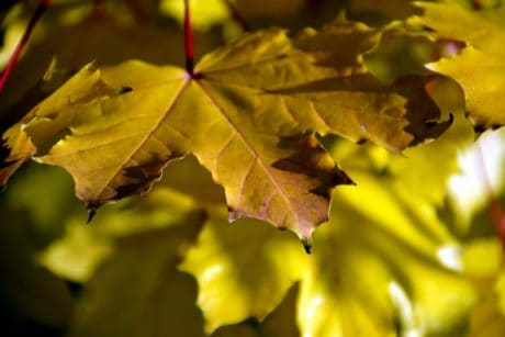 nature, leaf, flora, autumn, leaves, forest, tree, foliage