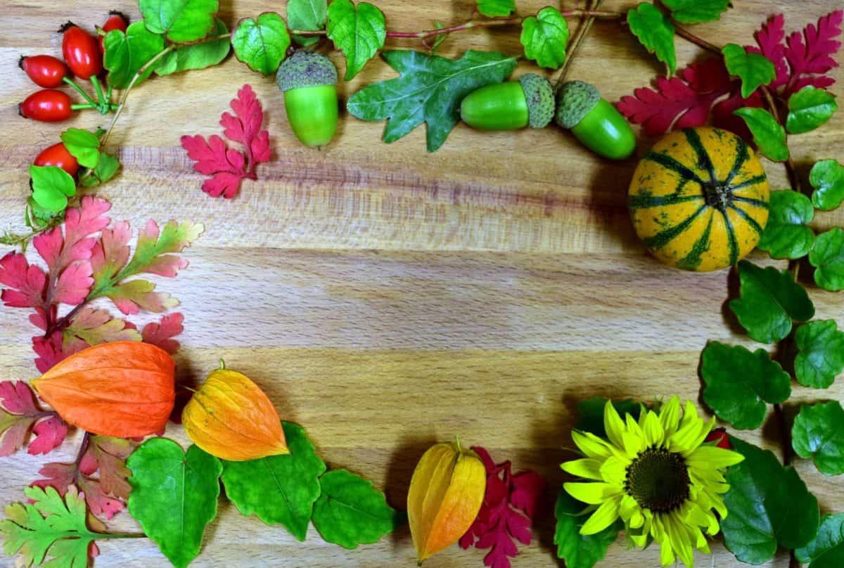 nature, flower, leaf, autumn, table, wood
