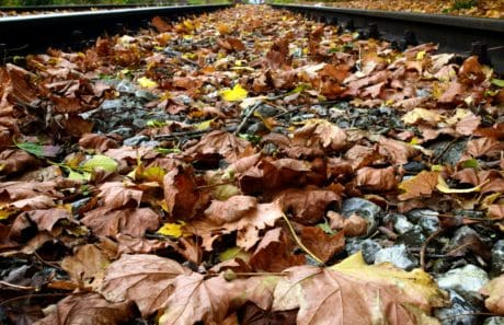 nature, environment, wood, leaf, outdoor, rail, autumn