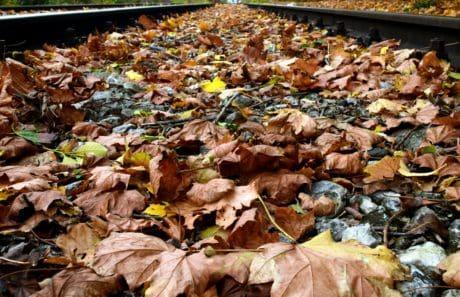 natura, ambiente, legno, foglia, all'aperto, ferroviario, autunno