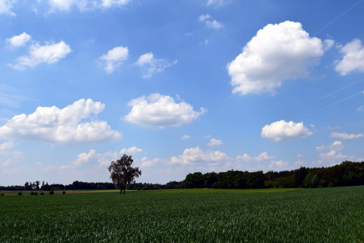 farm, landscape, blue sky, tree, nature, grass, field, agriculture