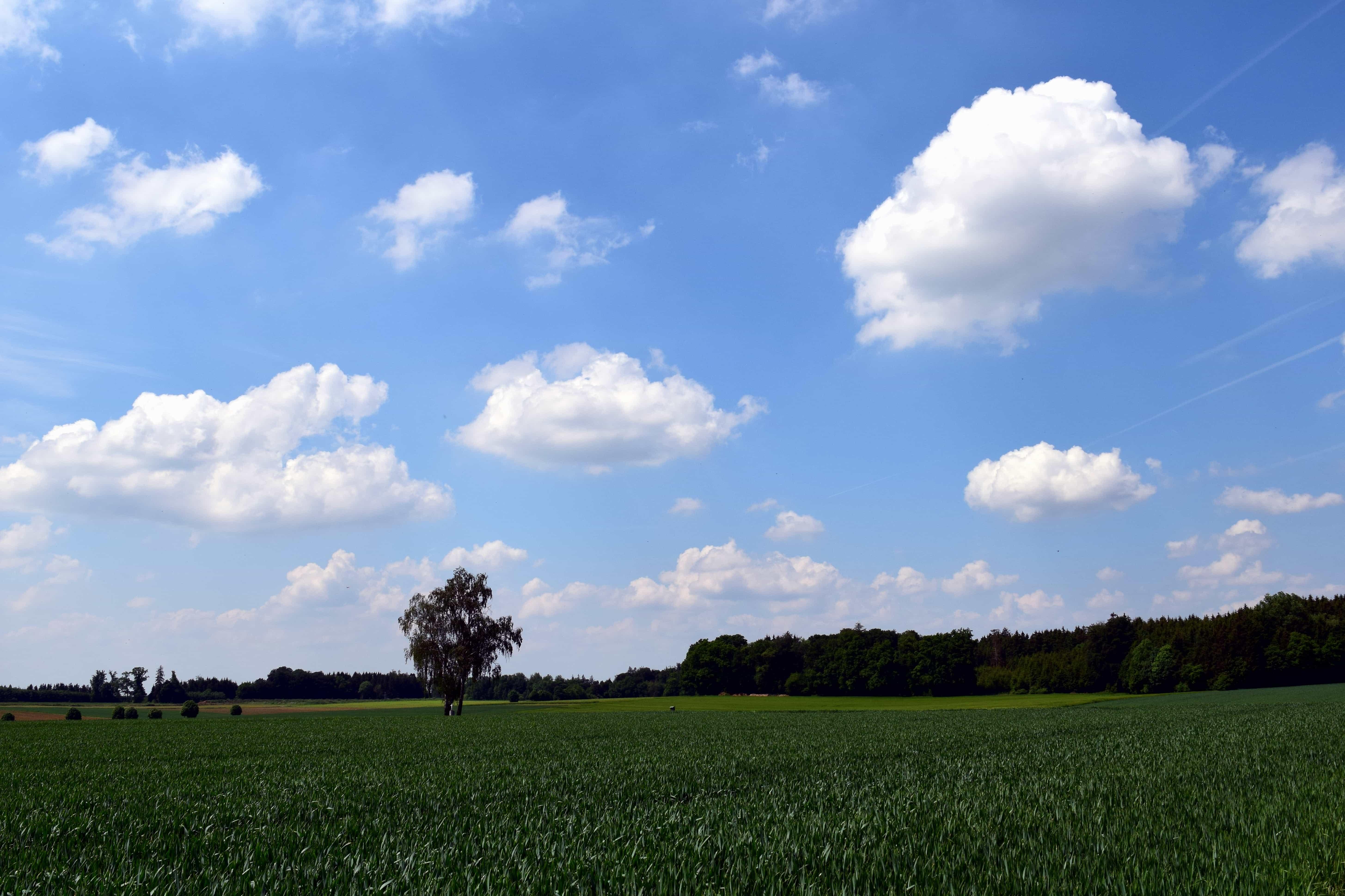Farm, Landscape, Blue Sky, Tree, Nature, Grass, Field, Agriculture