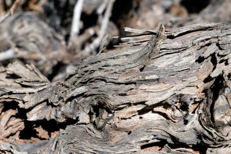 bark, wood, nature, dry, texture, daylight, brown