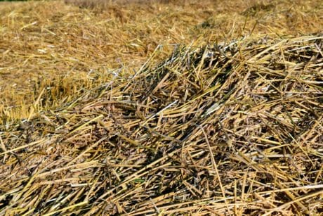 flora, farm, dry, straw, nature, agriculture, dry grass