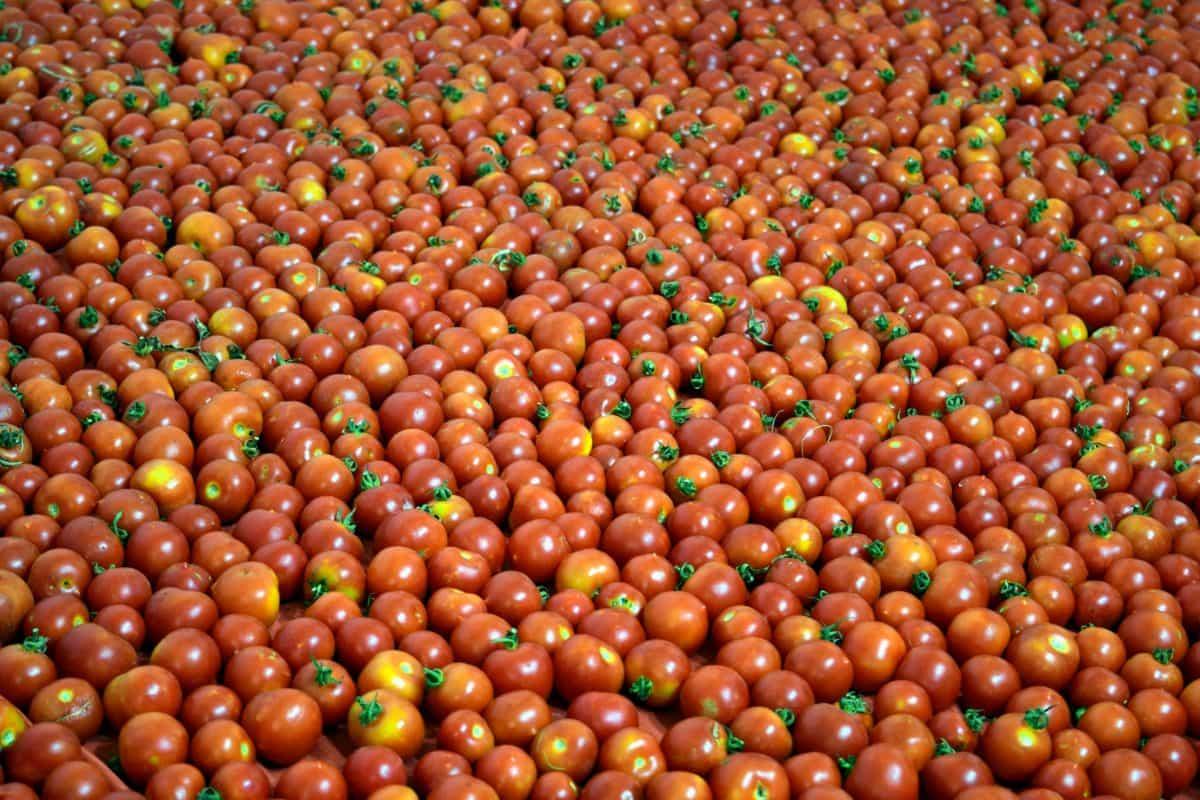 червено, храна, червени, домати, пазар, хранене, зеленчук