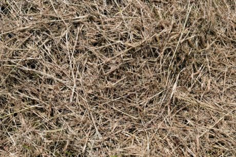 dry, texture, pattern, nature, straw, herb, plant, field