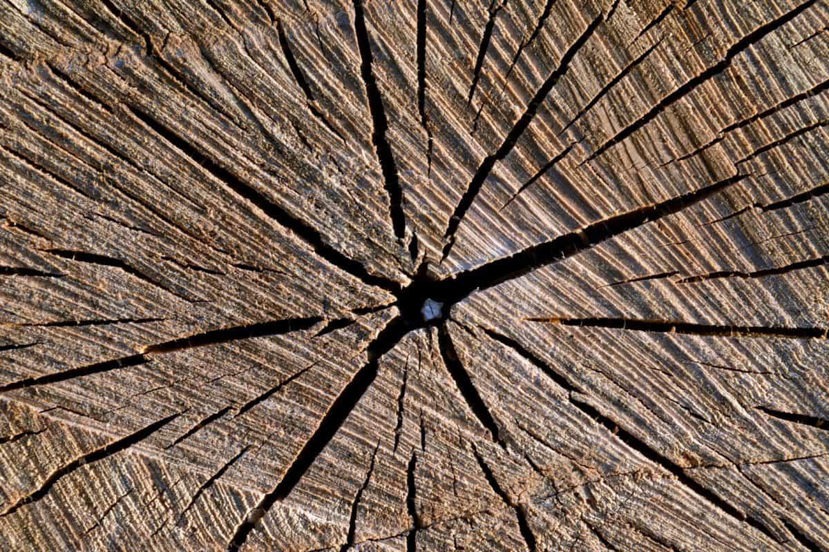 árbol, textura, macro, marrón, naturaleza, fisura