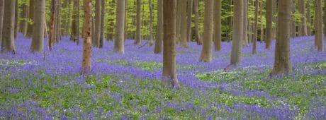 fleur, feuille, paysage, forêt, lumière du jour, bois, nature, flore, arbres